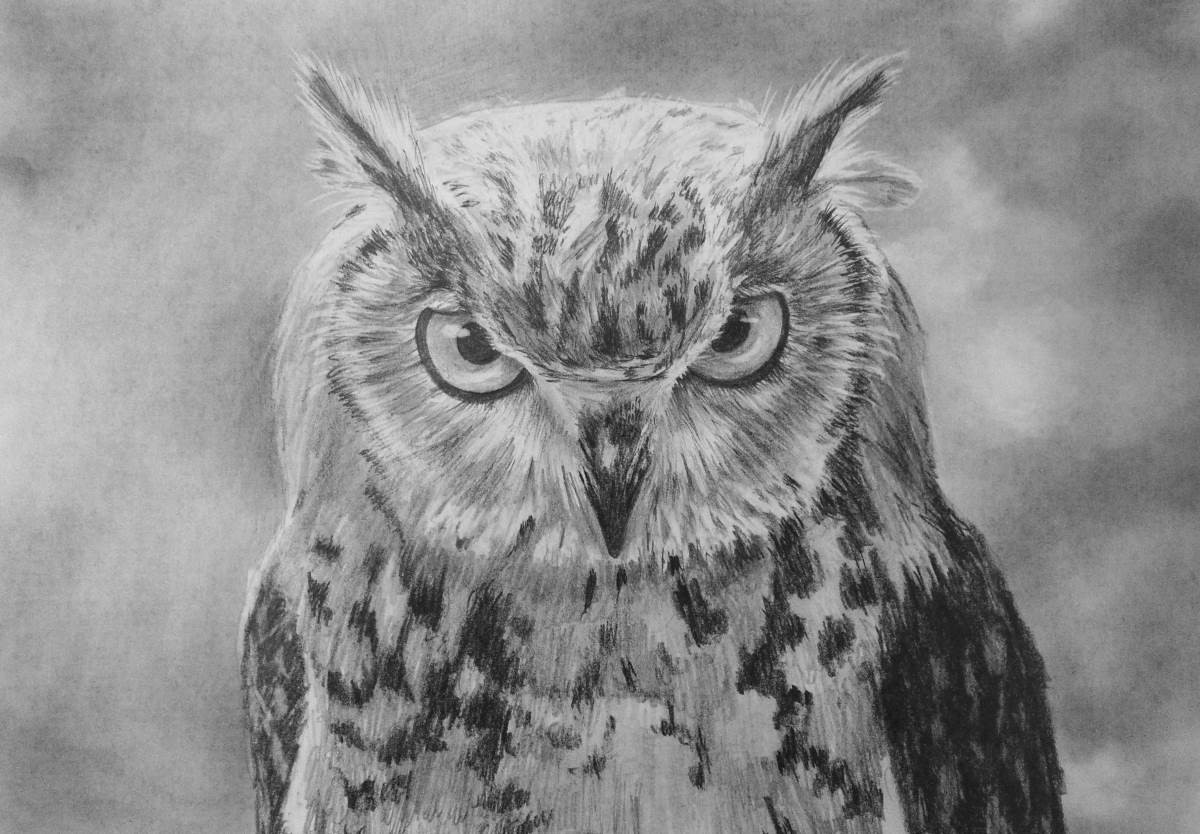 - How To Draw An Owl — Online Art Lessons