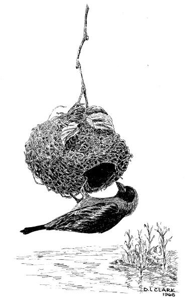 Pen & Ink drawing of a bird at a nest