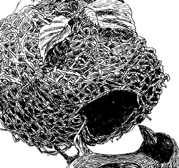 Close up of pen and ink frawing of a bird and nest