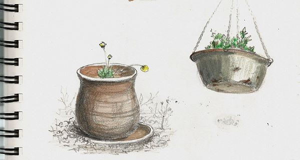 sample sketchbook sketches of plant pots