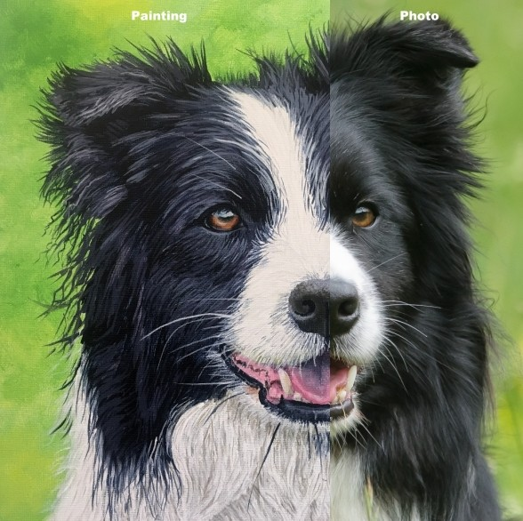 how to paint dogs - border collie