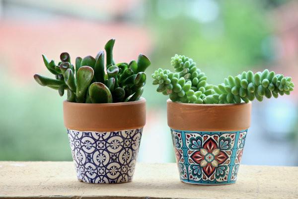 Painted pot plants