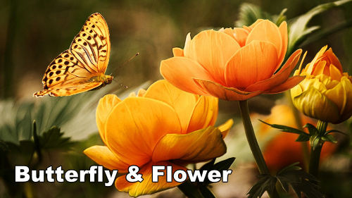 How to Paint a Butterfly & Flower