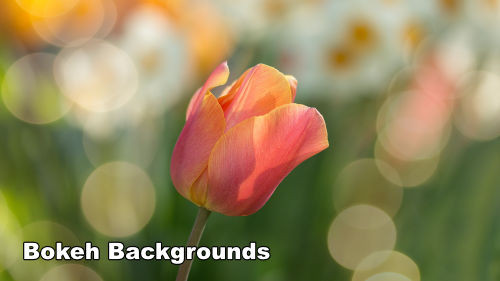 How to Paint Bokeh Backgrounds