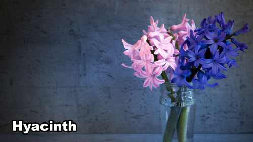 How to Paint Hyacinth Flowers in Acrylic