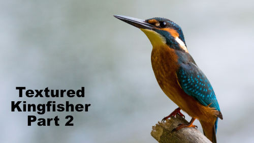 How to Paint a Textured Kingfisher